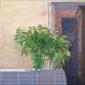 Herbs on table. 40x40 cm.