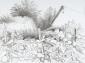 Moestuin Acquoy. tekening O.I. inkt. 50x65 cm.